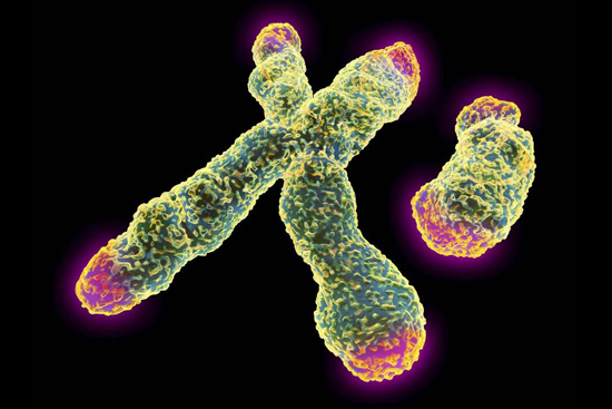 Relationship Between Telomeres, Stress and Aging
