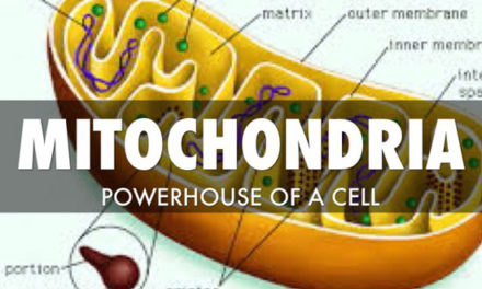 Why Am I So Tired? – Your Mighty Mitochondria